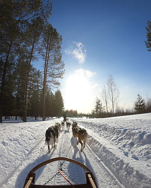 cold-dogs-frost-2531014.jpg