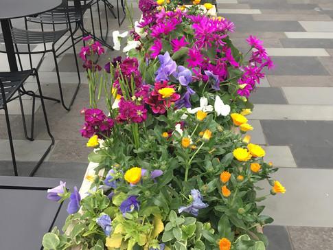 City Flower Bed