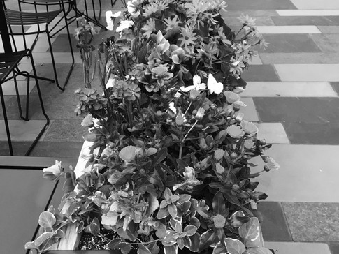Colorless Bouquet