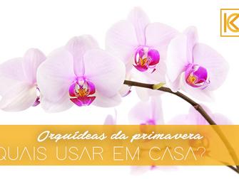 Orquídeas da primavera: descubra quais espécies usar em casa