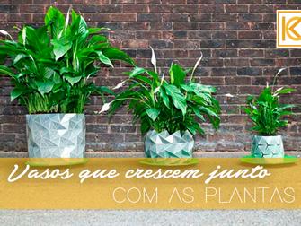 Vasos que crescem junto com as plantas