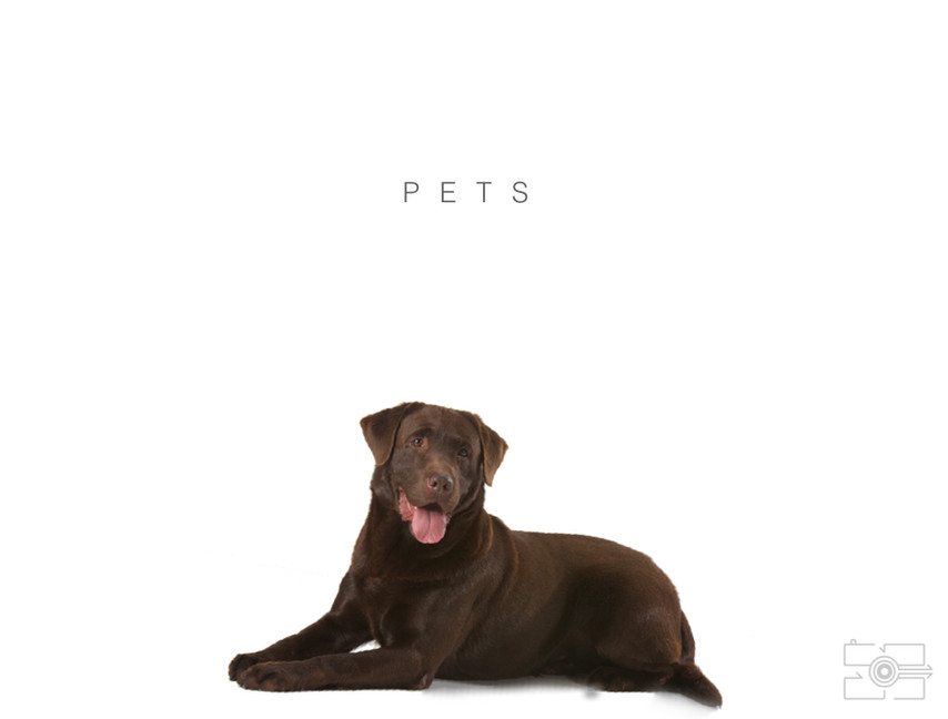 Lola_Pet_para_site_002.jpg