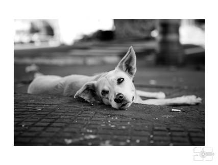 Lola_Pet_para_site_025.jpg