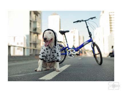 Lola_Pet_para_site_019.jpg