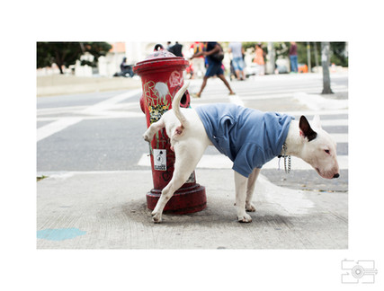 Lola_Pet_para_site_018.jpg