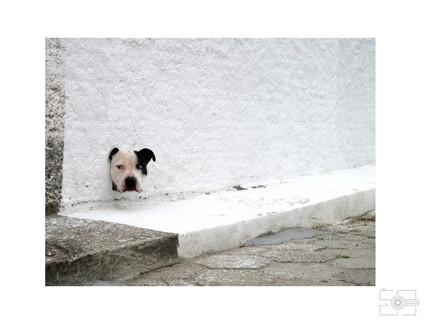 Lola_Pet_para_site_023.jpg