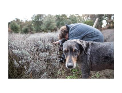 Lola_Pet_para_site_038.jpg