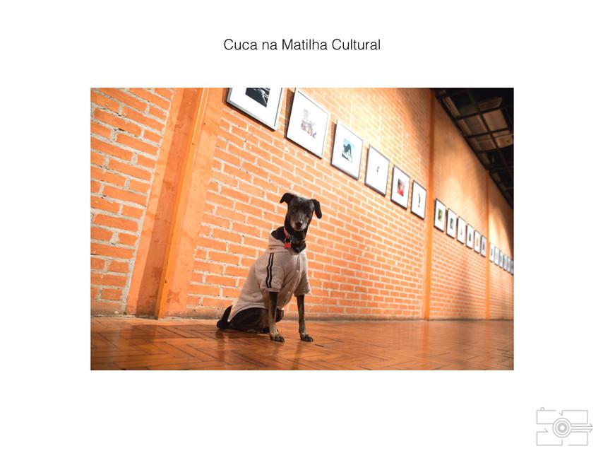 Lola_Pet_para_site_034.jpg