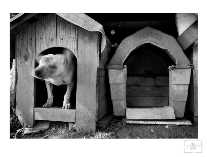 Lola_Pet_para_site_029.jpg