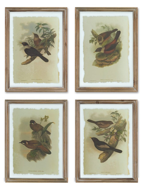 Framed Bird Prints on Glass