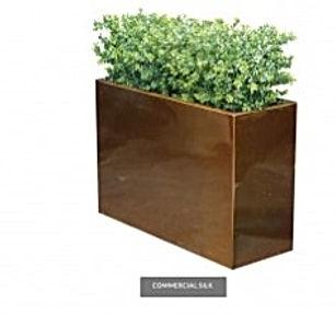 Lrg Leaf Boxwood Hedge.jpg