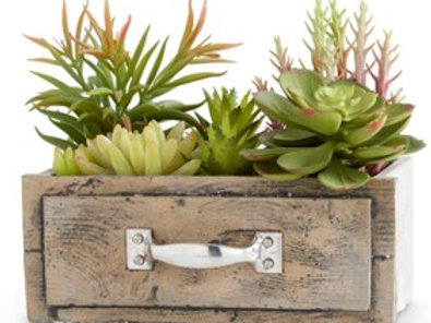 Succulents in Small Wood Drawer Planter