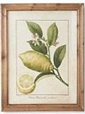 Botanical Fruit Print in Wood Frame