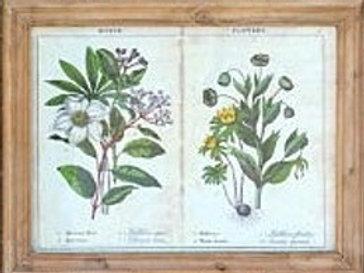 Four Seasons Page Framed Print
