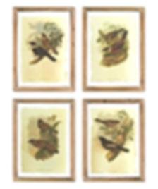 Birds%20on%20Glass%20Prints_edited.jpg