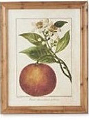 Botanical Fruit Print in Wood Frame