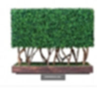 Exterior Boxwood Hedge.jpg