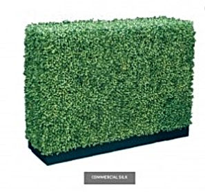 Boxwood Trimmed Topiary.jpg