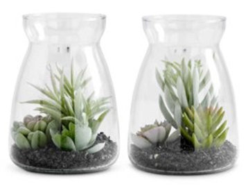 6 Inch Succulents in Glass Jars