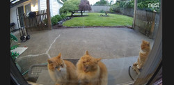 a Backyard&Foodcam Live feed thumb_morn