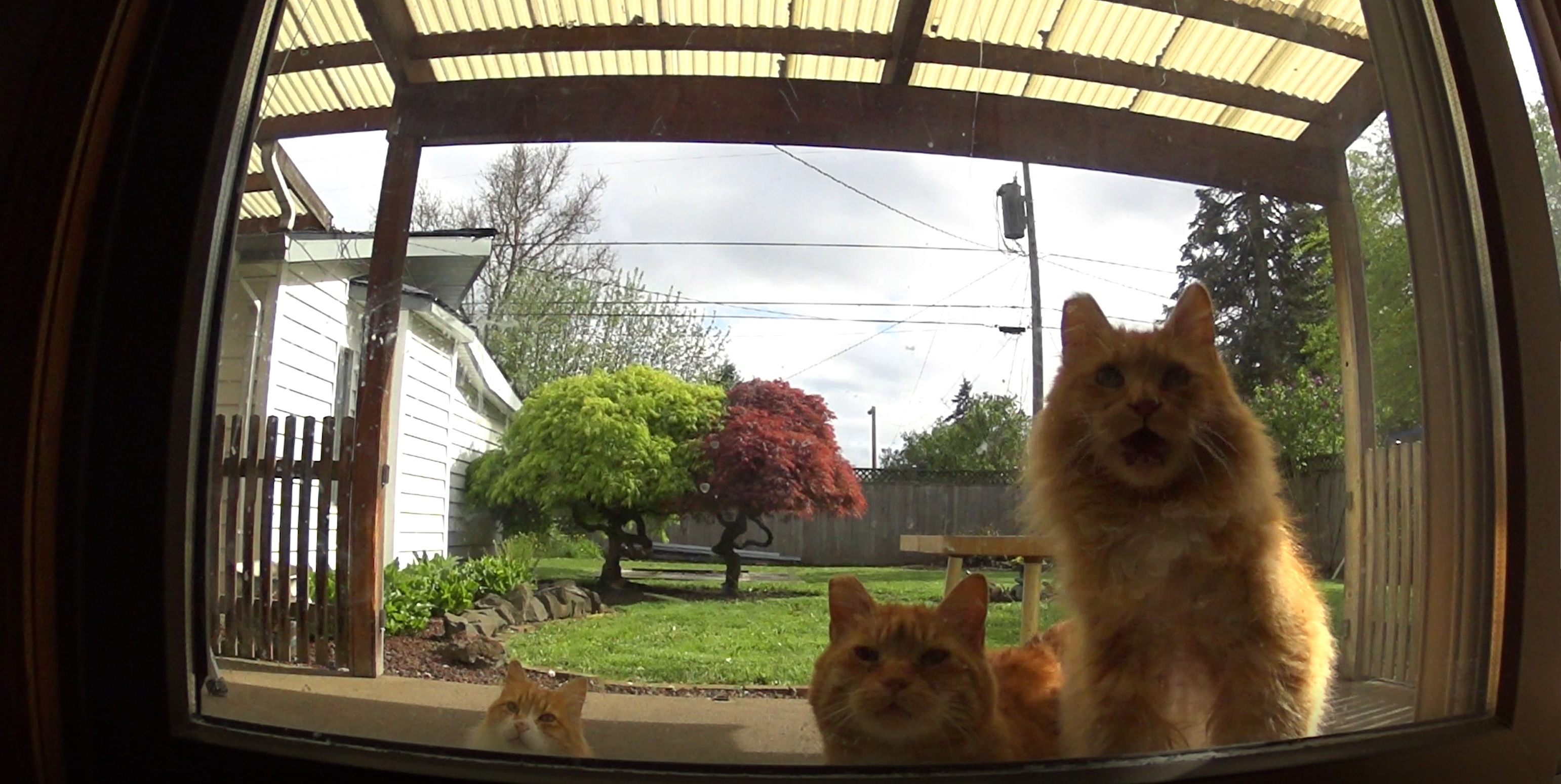 M3FC 0134 A different view of my 3 feral cats (timelapse)