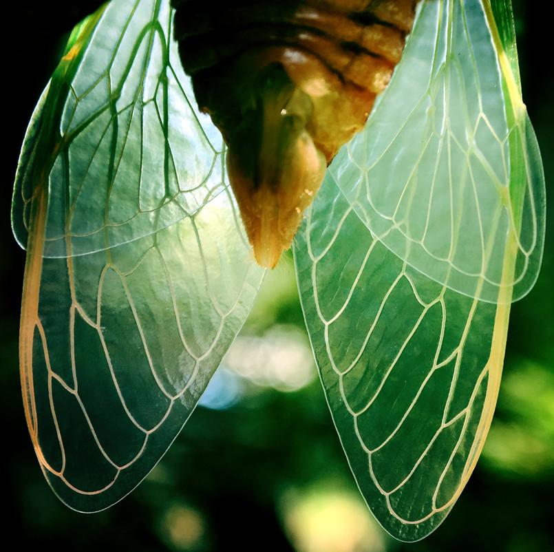 Ah! Bright Wings
