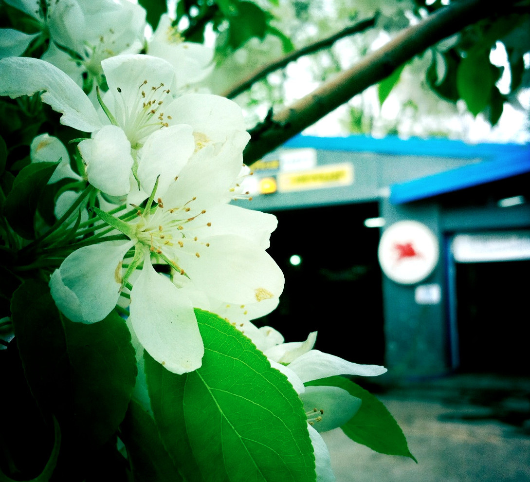 Spring Comes to the Mobil Station