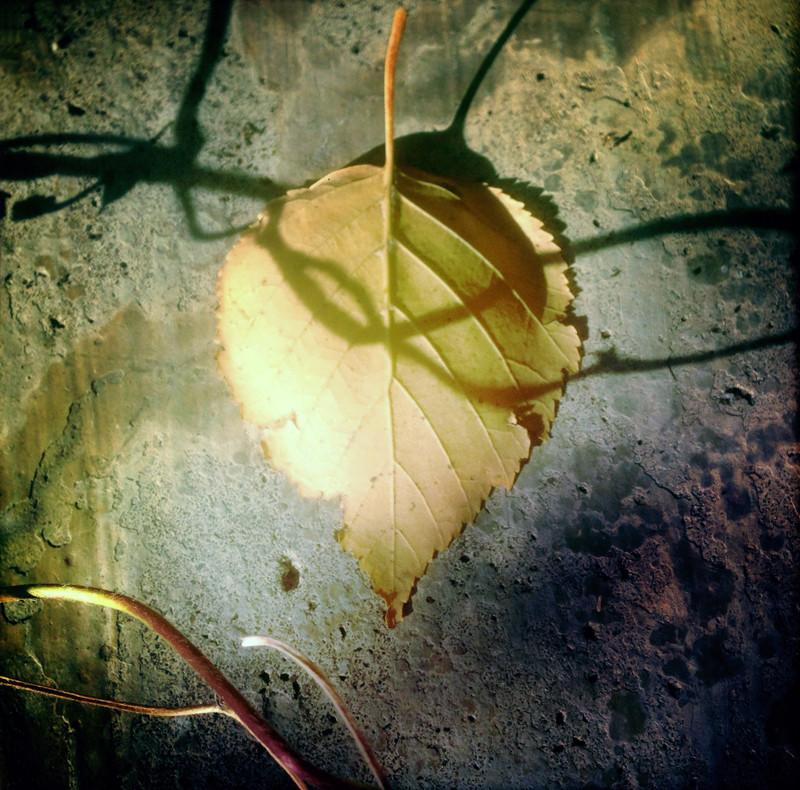 Intangible Entanglement