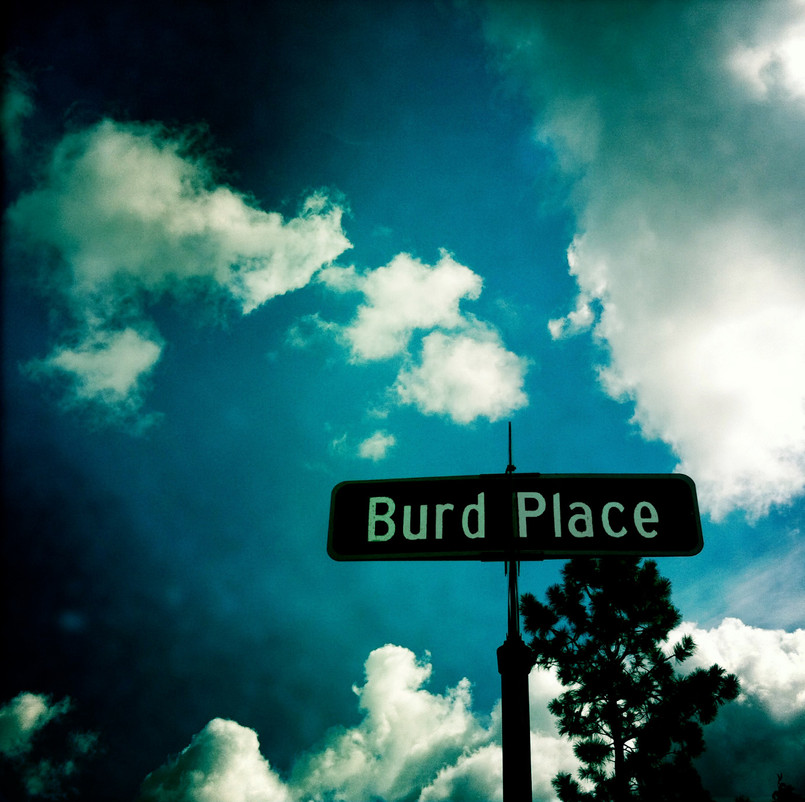 For the Burds