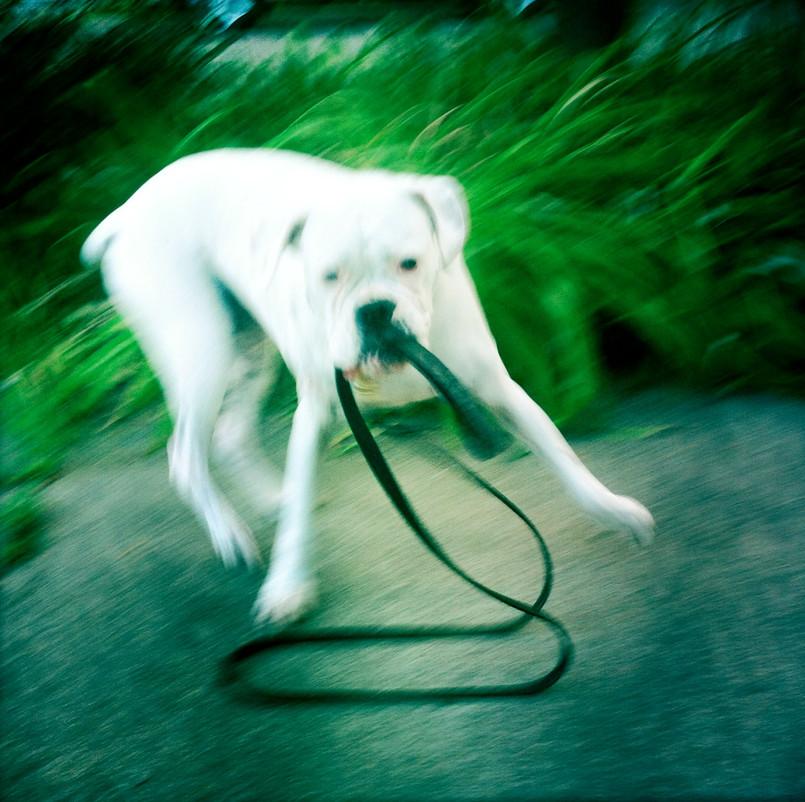 Self-Walking Dog