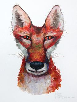 Fox_s