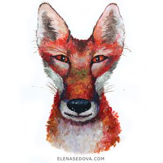 Animal portret - fox.jpg