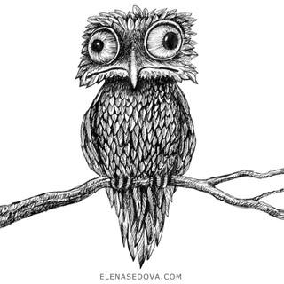 sketch - owl.jpg