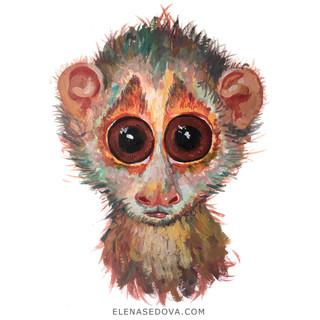 Animal portret - lemur.jpg