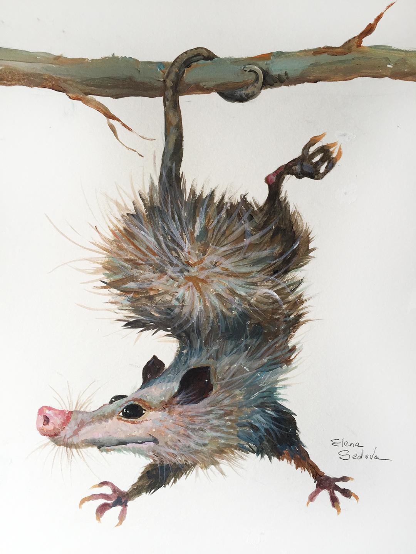 Possum_s