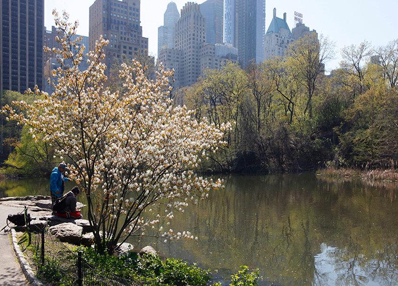 Central Park Manhattan New York