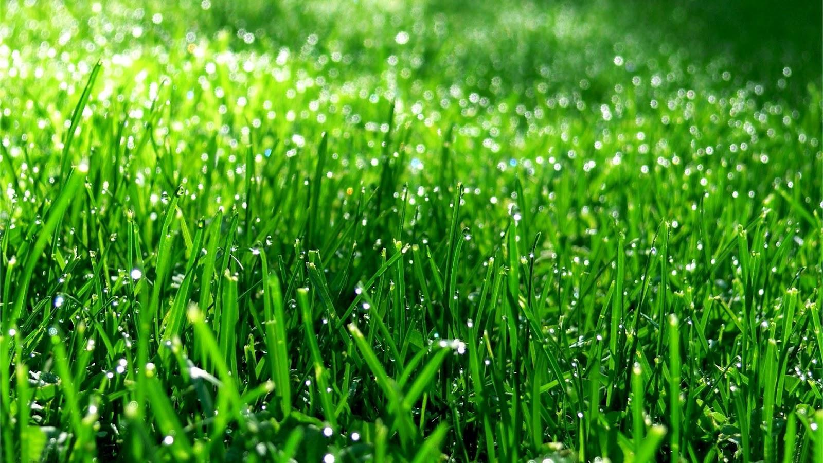 Groen-gras-achtergronden-hd-gras-wallpap