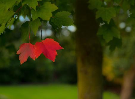 September - Time for the new