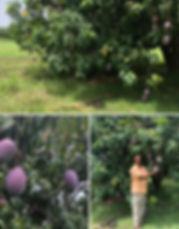 Choisel farm visit.JPG