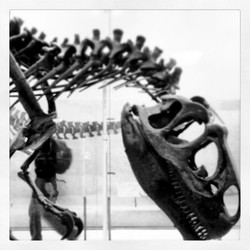 Instagram - I shot this picture almost a year ago,  green allosaur is still upse