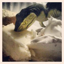 Instagram - Greedy v raptor been eyeballing my key lime pie all evening...jpg