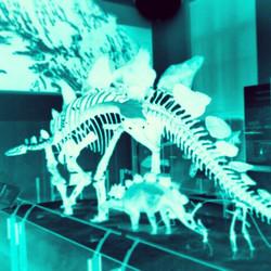 Instagram - Stegosaurus #amnh #2012 #Godmadedinosaurs #Godfloodedtheearth