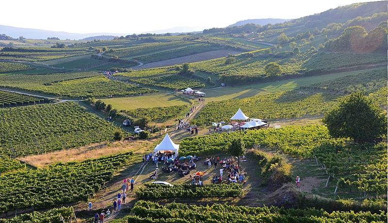 Виноградники в Венском Лесу