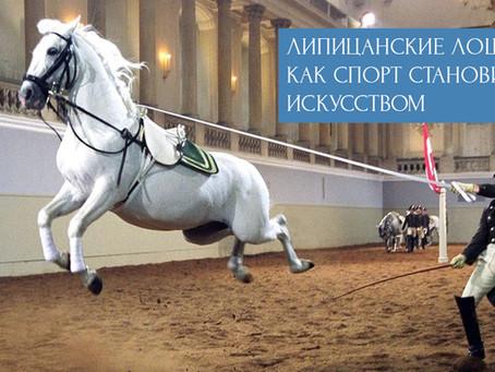 Липицанские лошади - как спорт становится искусством