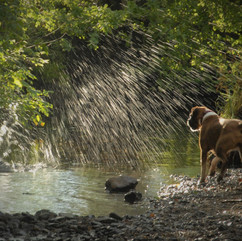Dogs love water