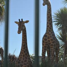 Dawlish zoo
