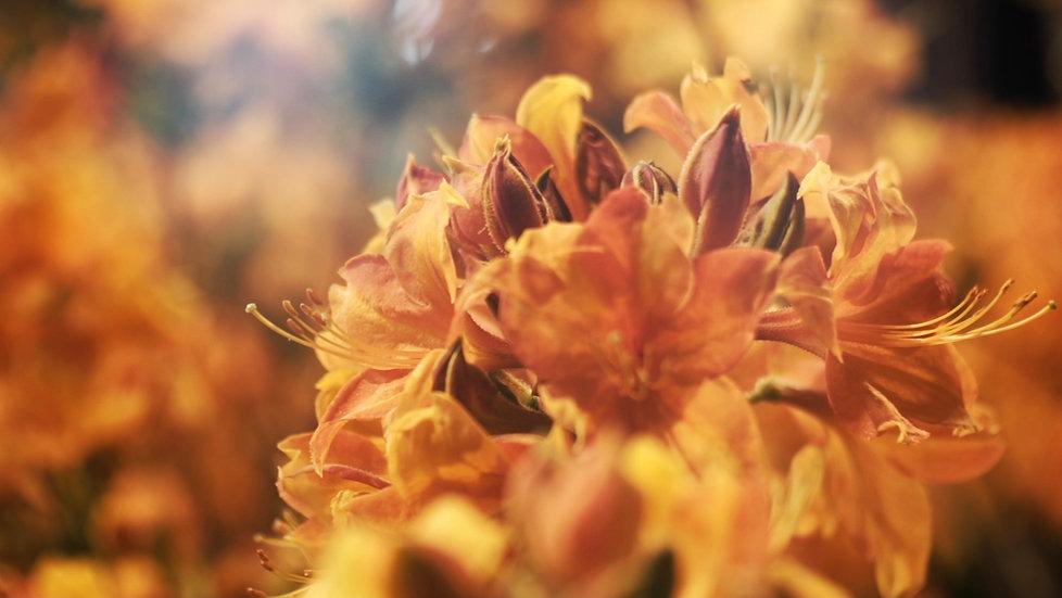 Stlvisuals, floraliën, gent