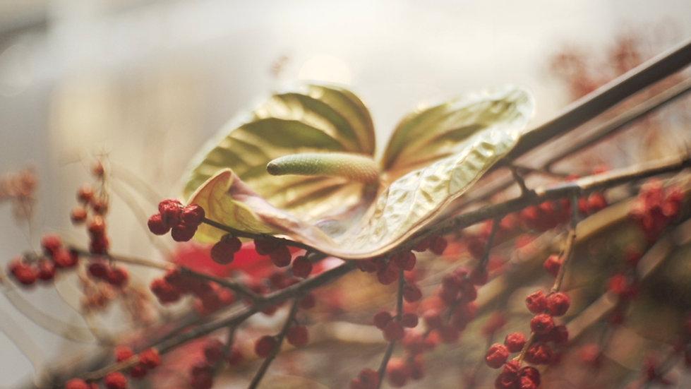 Stlvisuals, floraliën, mark colle