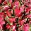 Thumbnail: Caladium Cherry Tart