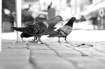 Street Photography Birds